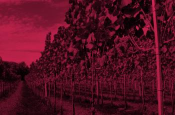 Vinho brasileiro será tema do próximo Globo Repórter