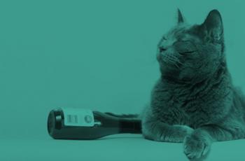 Vinho para Gatos transforma seu Pet em um Mini-Sommelier