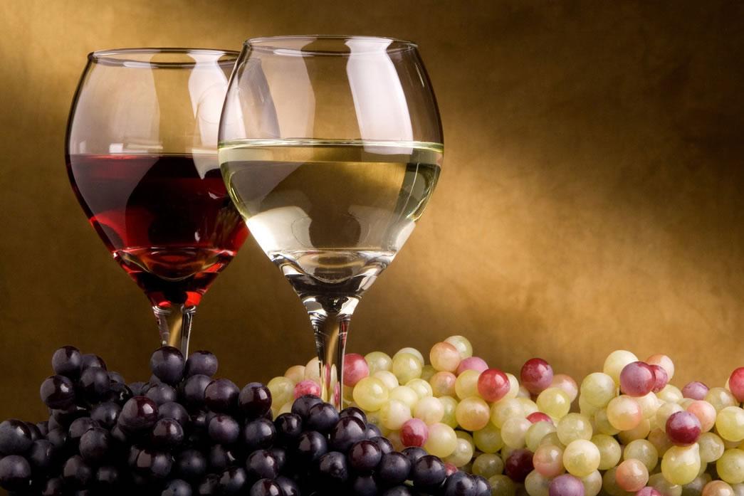 vinho emagrece