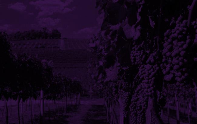 Indicação de Procedência do vinho brasileiro